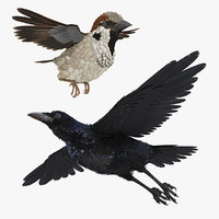 Rigged Raven and Sparrow 3D Models Collection