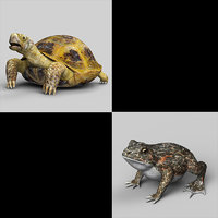 3D turtle toad model
