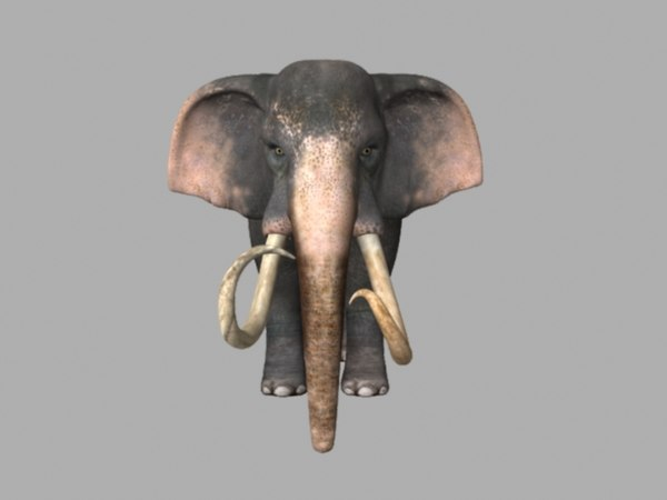 animations elephant 3D model