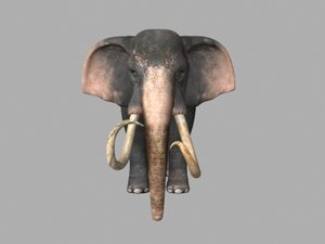 animations elephant 3D model