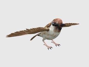 3D vr sparrow bird