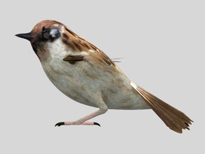 rig sparrow bird 3D model