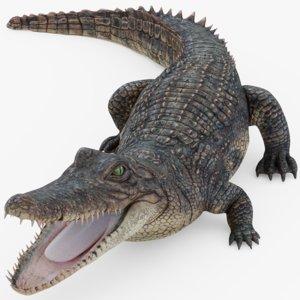 3D alligator gator rigged