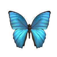 Rig Butterfly