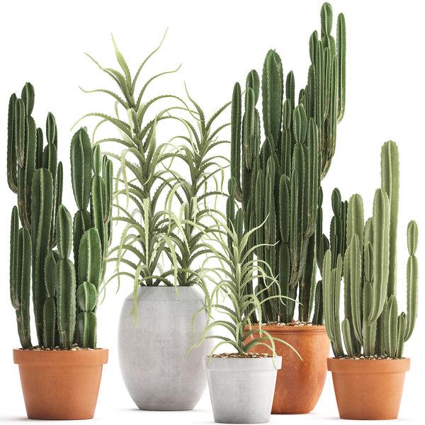 ornamental plants exotic cactus 3D model