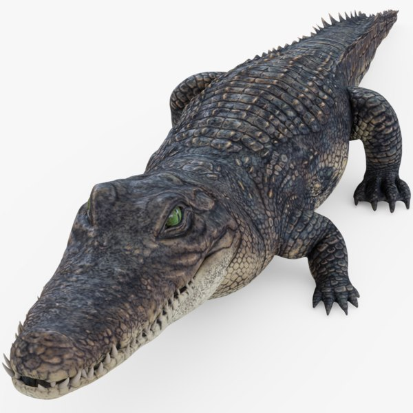 alligator gator 3D