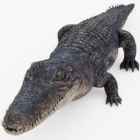 alligator gator 3D