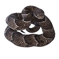 rigged puff adder reptile model