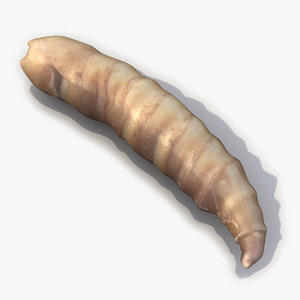 3d model of maggot modelled