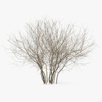 3D winter bush