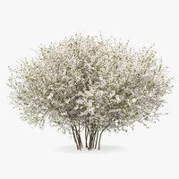 3D bush linnaea amabilis