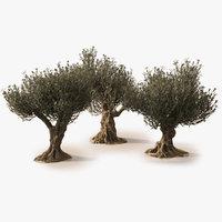 Animierte fotorealistische Olivenbäume