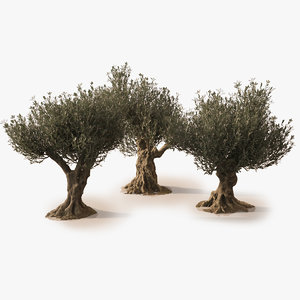 3D olive trees animation realistic model