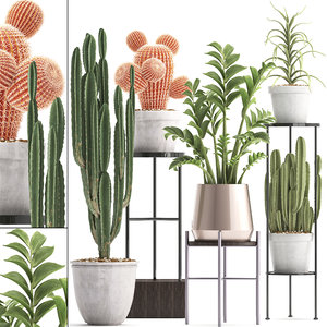 3D plants exotic cactus model