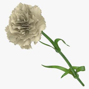 carnation white - 3D model