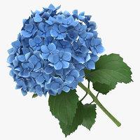 hydrangea blue - 3D model