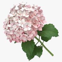 hydrangea pink - 3D