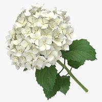 3D hydrangea white -