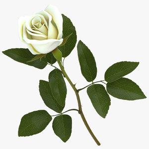 3D rose white - model