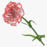 3D carnation white red model