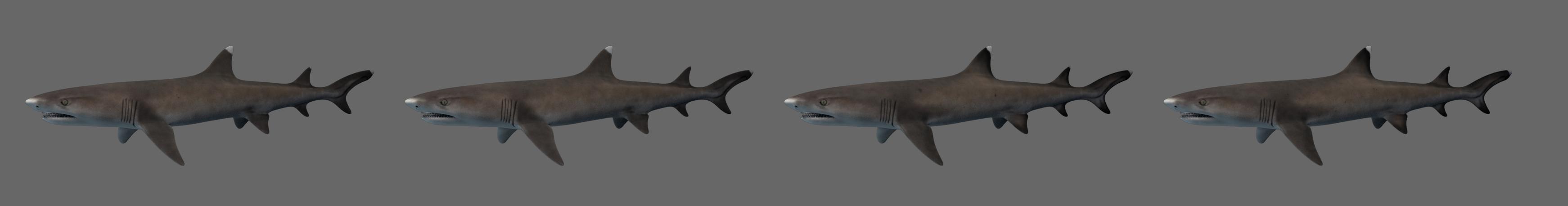 whitetip reef shark 3D model