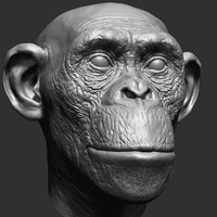 chimpanzee head 3D model