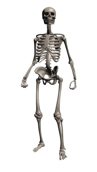 3D model skeleton rigged