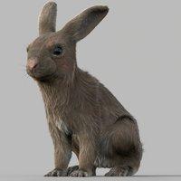 3D rigged fur