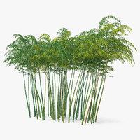 bamboo grove 3D model