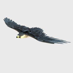 3D eagle aquila bird