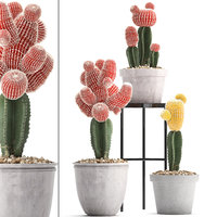 3D ornamental plants exotic cactus model