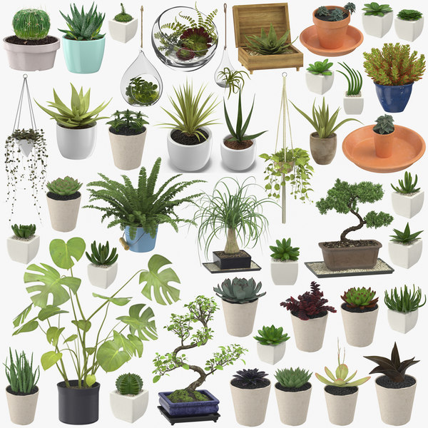 3D model indoor plants - 42