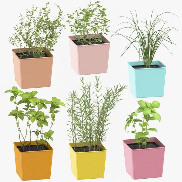 indoor herbs 3D model