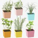 Indoor Herbs Collection