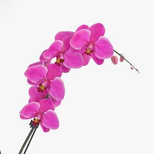 orchid flowers plant model