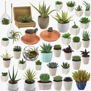 succulents 03 - 36 3D