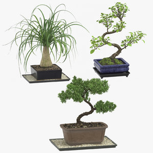 bonsai trees 3D model