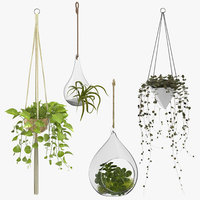 Hanging Home Plants