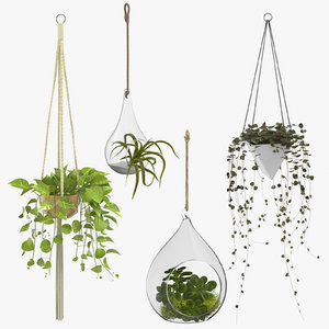hanging home plants 3D model