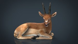 african antelope 3D