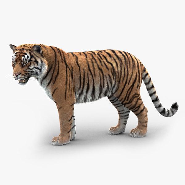 tiger rigged fur model
