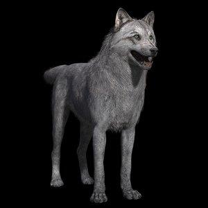 3D grey wolf rig