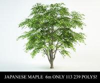 japanese maple 3D model