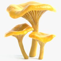 chanterelle mushrooms 3d model