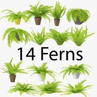 3D fern pack 02 model