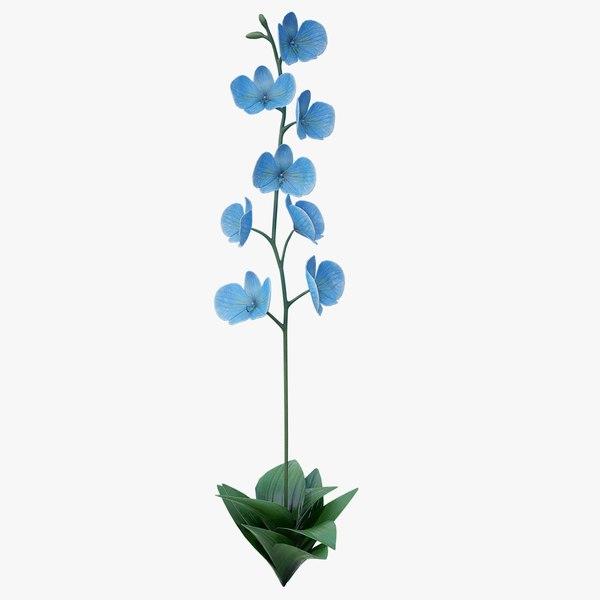 3D model realistic blue orchid