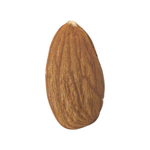 scanned almond 3D model