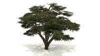 Lebanon Cedar Tree 3d Model
