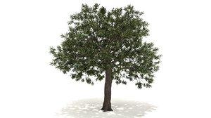 live oak tree 3D model