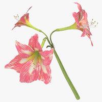 amaryllis pink - 3D model